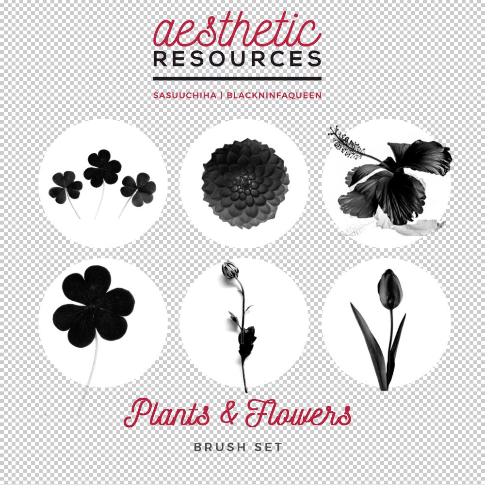 植物鲜花花朵图形PS笔刷素材