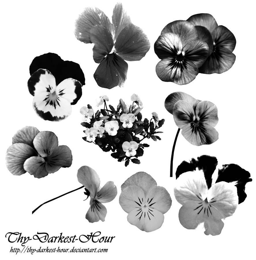 漂亮的三色堇鲜花花朵图案PS笔刷下载