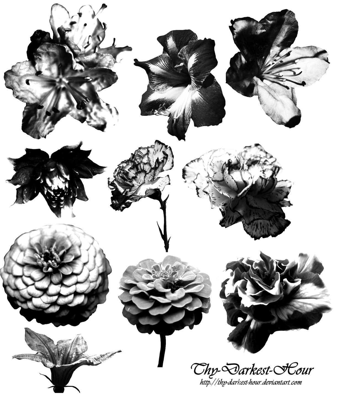 百日菊等盛开的鲜花花朵图案PS笔刷