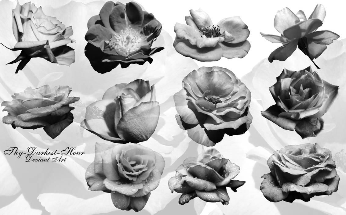 玫瑰花花朵、玫瑰鲜花PS笔刷下载