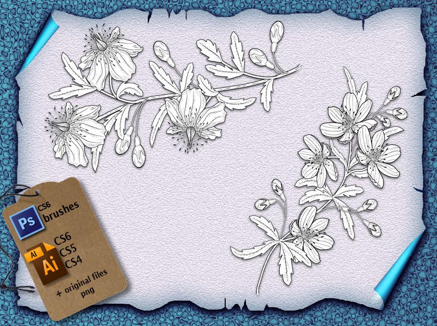 素描式植物花朵photoshop笔刷素材免费下载
