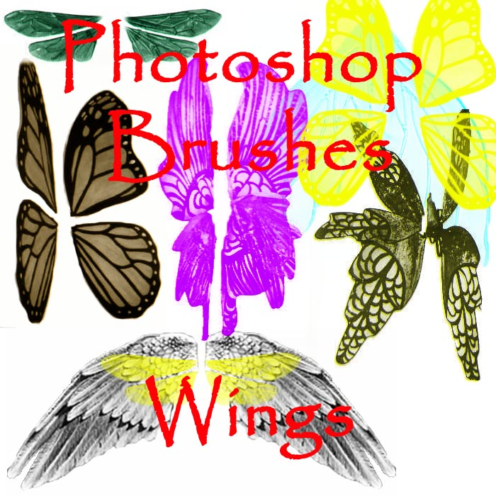 蝴蝶翅膀、昆虫翅膀图像PS笔刷免费素材下载