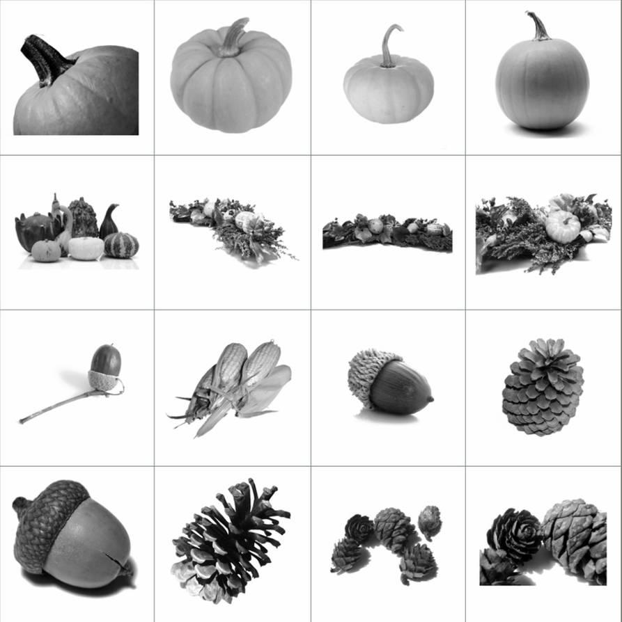 松果、南瓜、坚果等食物素材PS笔刷素材