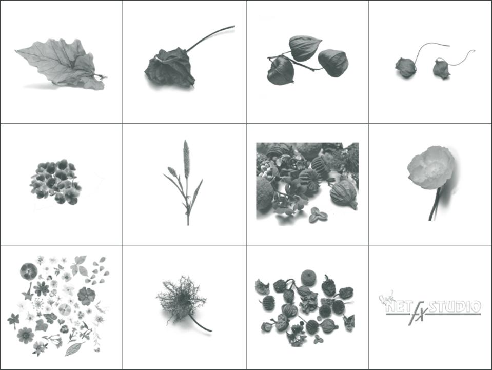 11种高清分辨率的植物叶子、花朵、嫩枝条等PS植物笔刷素材