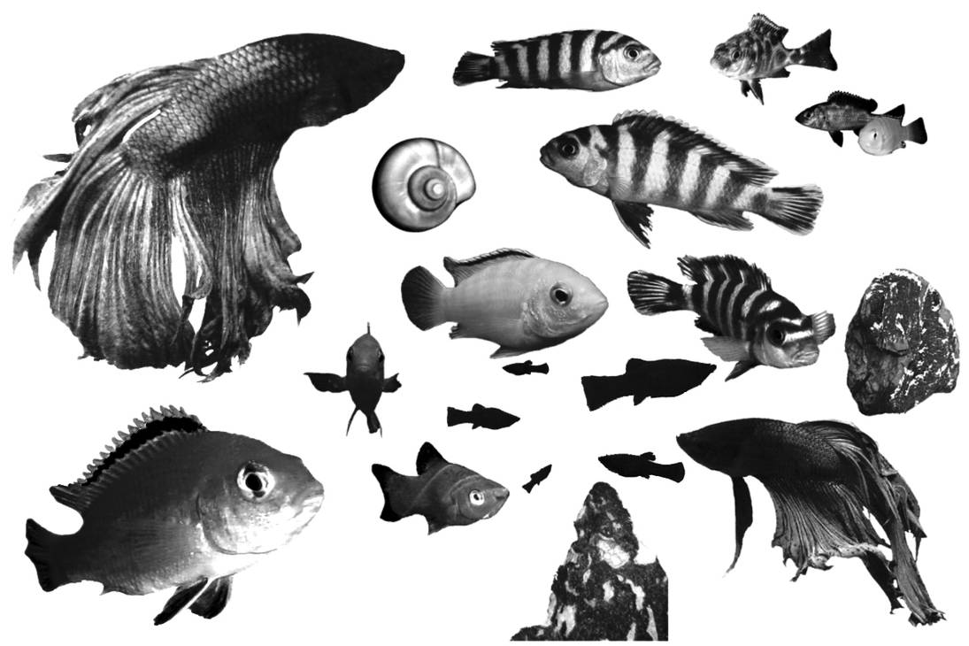 金鱼、海洋生物、小丑鱼、鱼PS笔刷下载