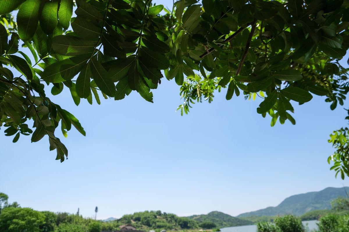 可免费商用!树叶天空融合背景图片照片素材免费下载