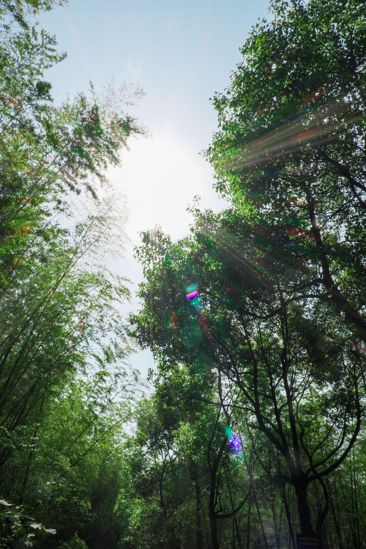阳光下的树林风景照片下载 - 免费正版图片