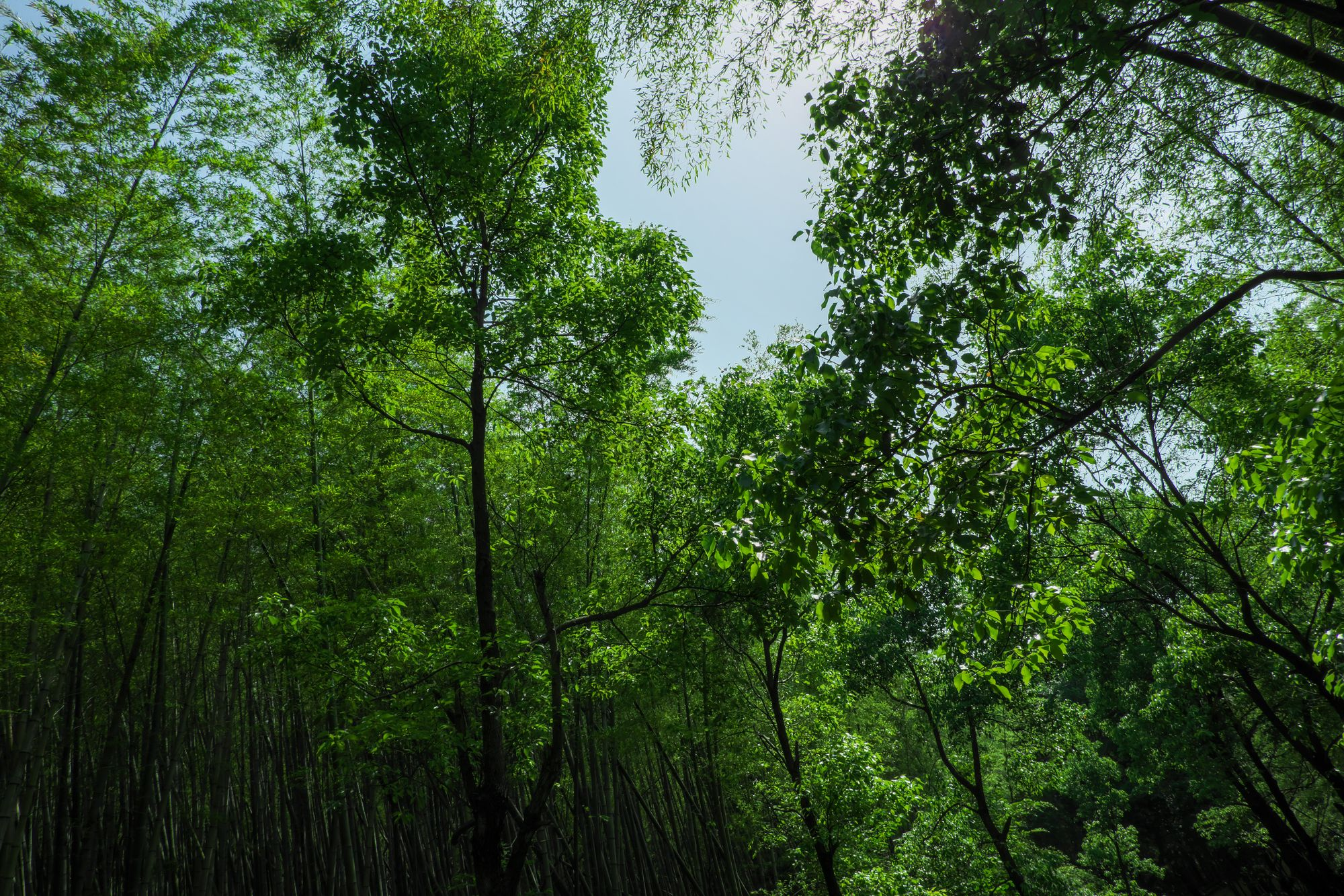森林 - 免费正版图片