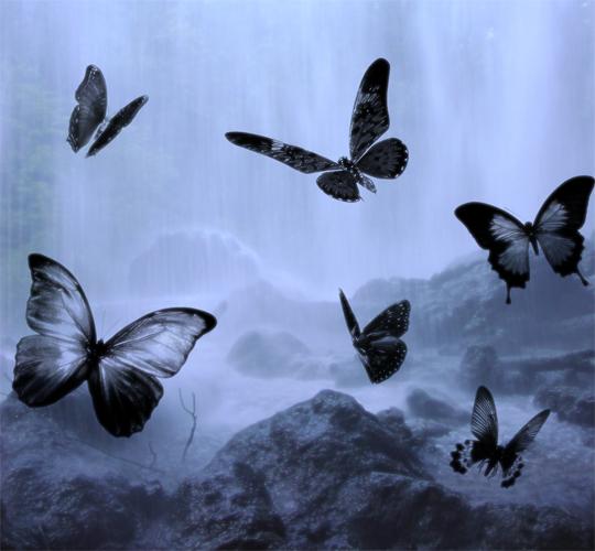 蝴蝶剪影ps笔刷