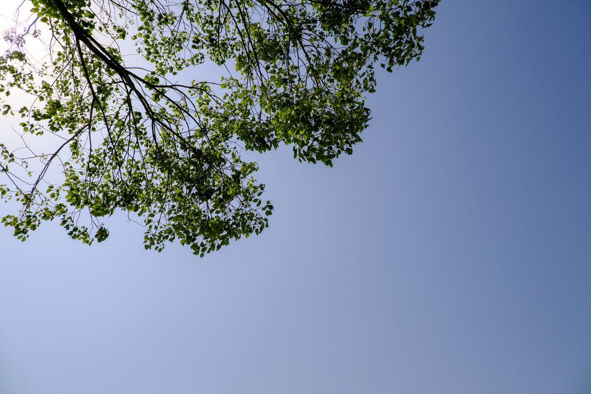高品质树荫和天空高清照片下载  -  免费正版授权