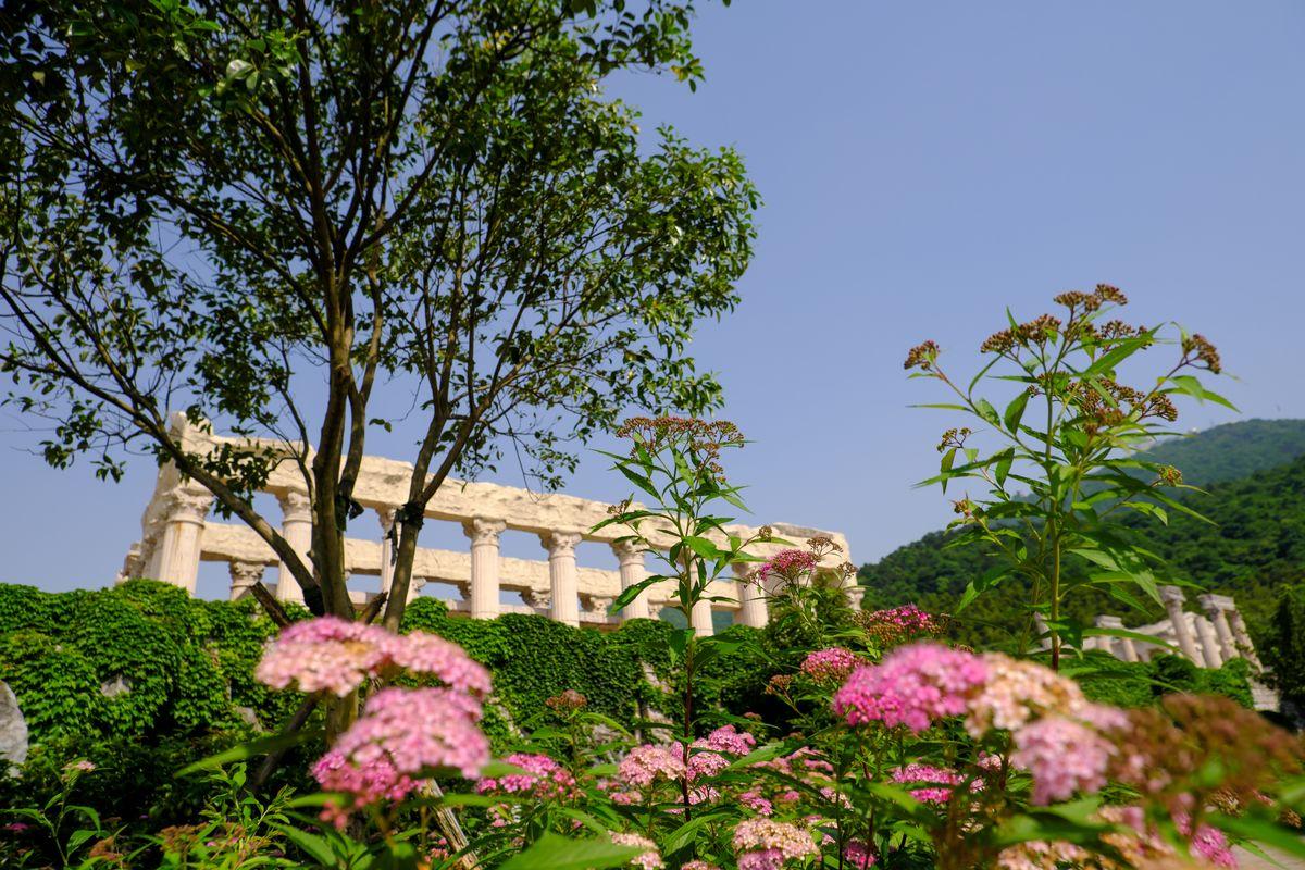 春天绿意背景图片  -  免费商用