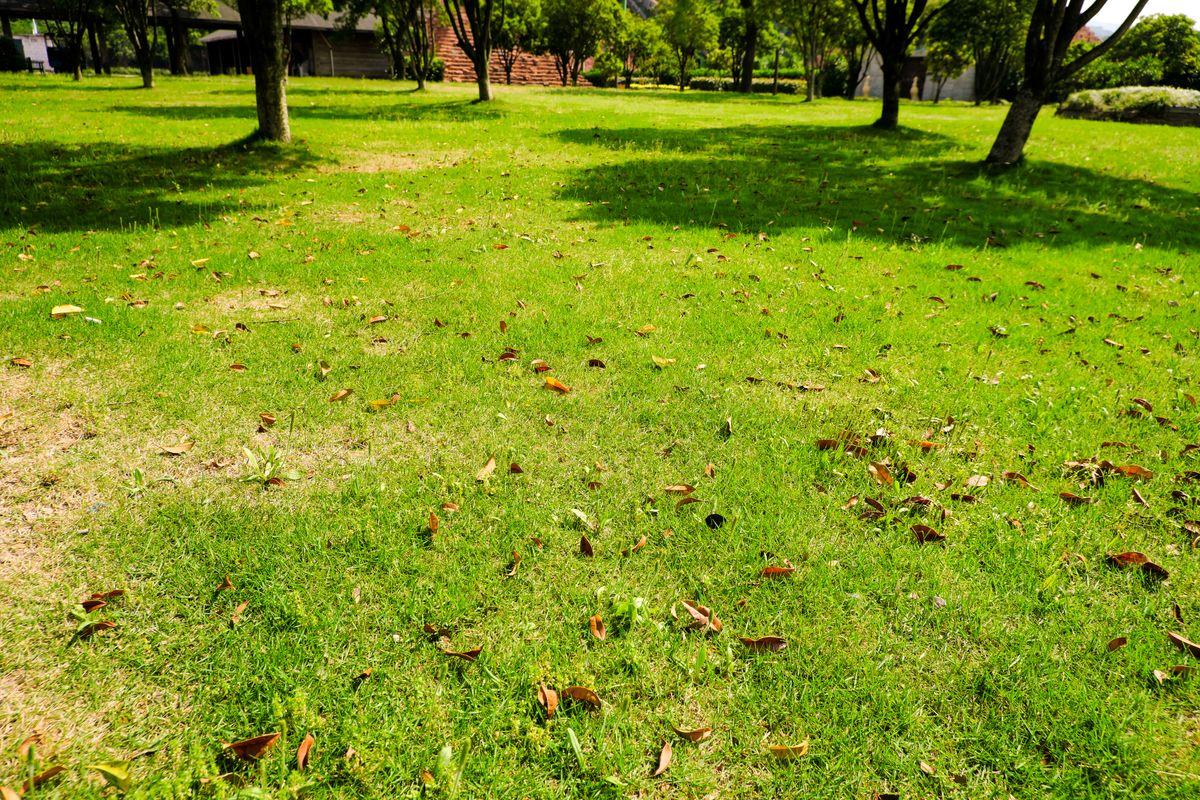 春天的草坪、草地背景 - 免费商用图片
