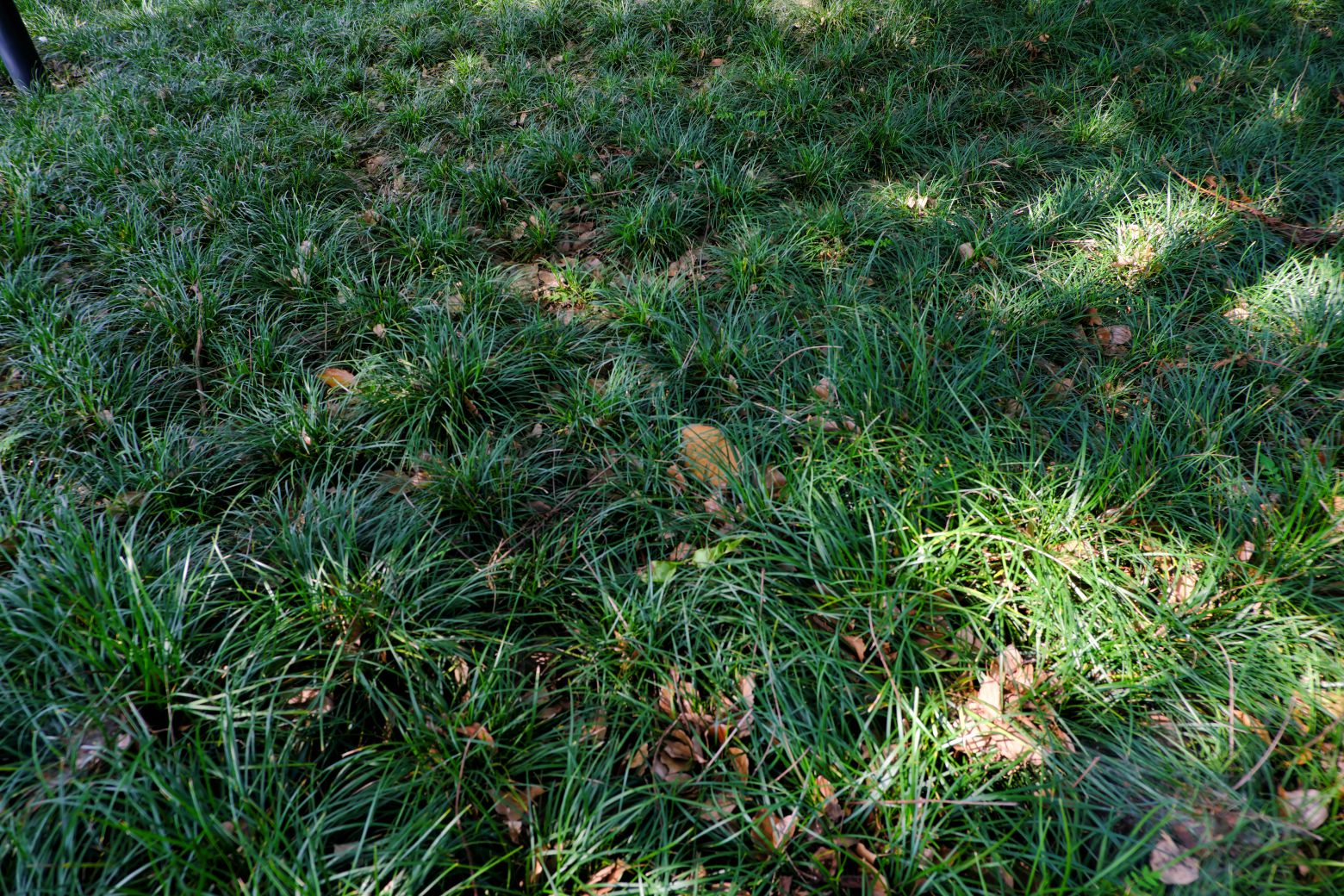 沿阶草、草坪背景图片 -  免费商用照片下载