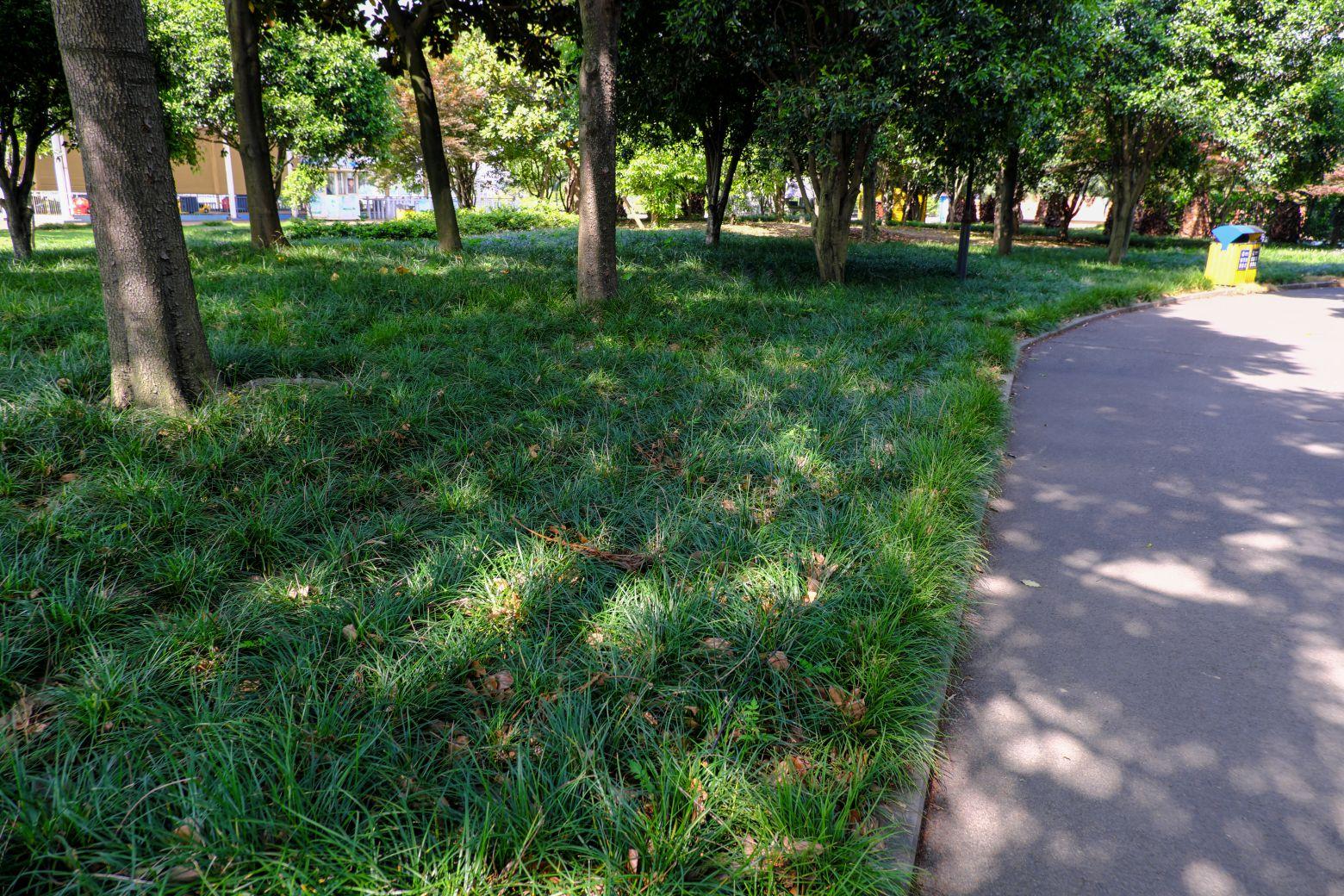 沿阶草、草地高级背景  -  免费可以商用