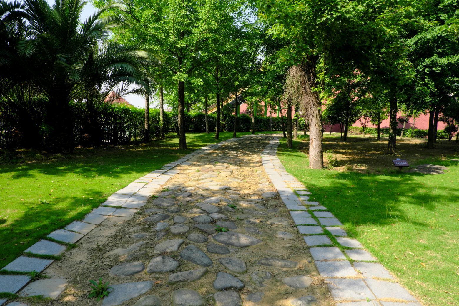 树林小道、公园小道 - 免费商用图片