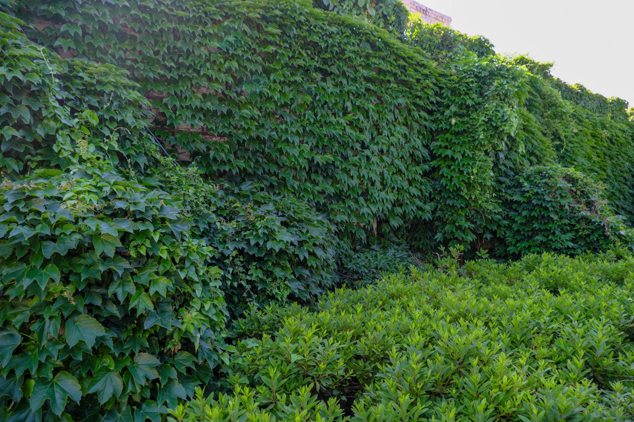 绿色植物背景照片下载