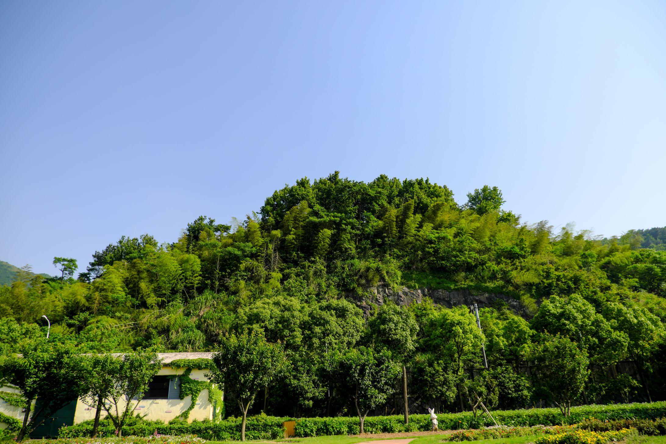 竹林蓝天高清照片下载