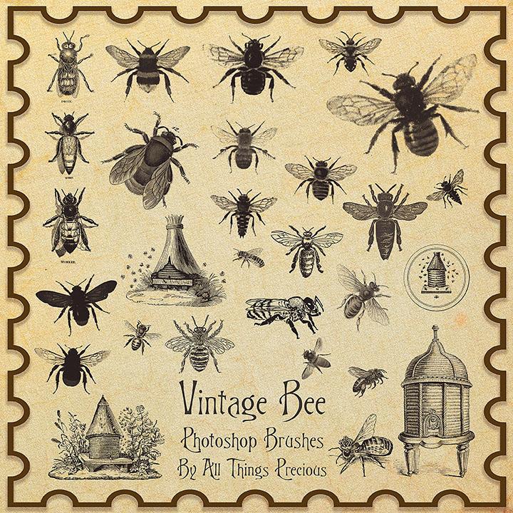 苍蝇、蜜蜂标本图案PS笔刷