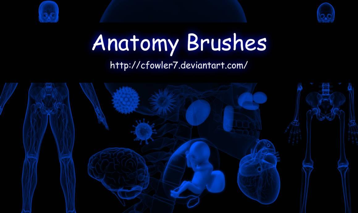 人体透视解剖构造图PS笔刷
