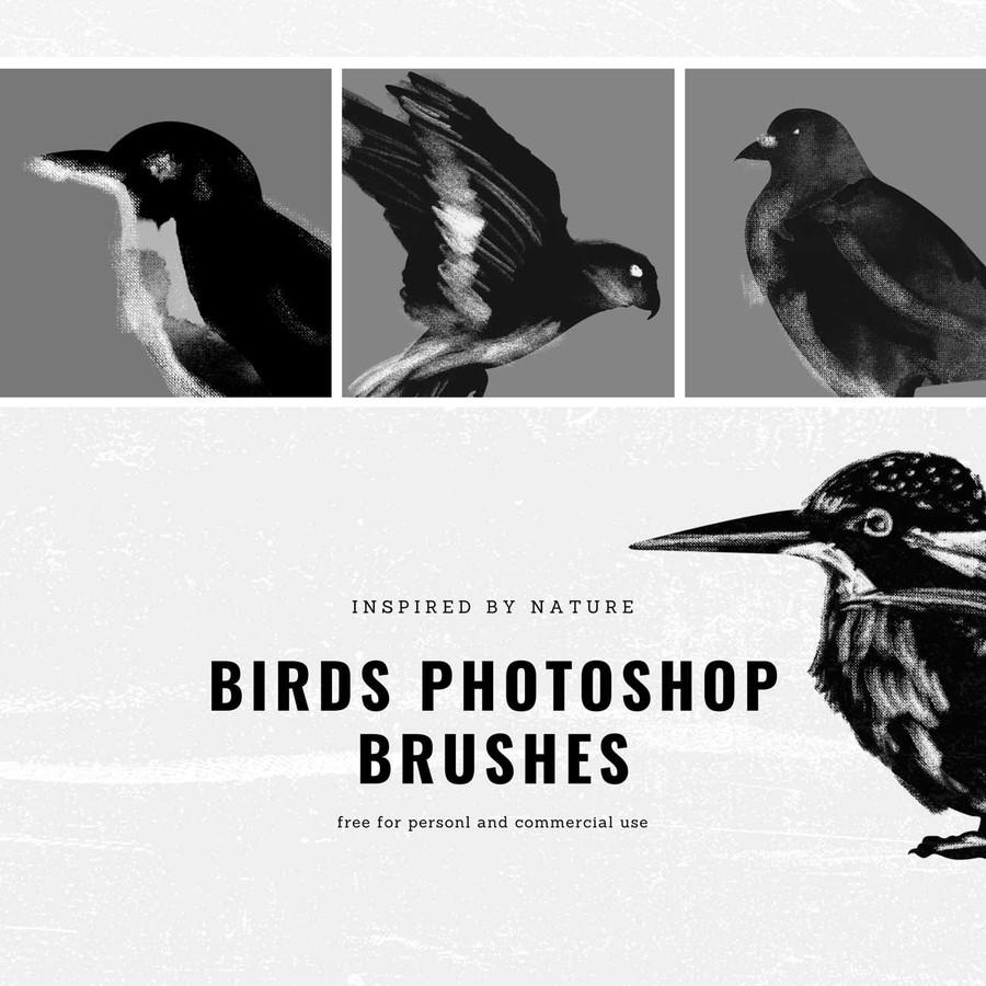 涂鸦鸟Photoshop笔刷素材