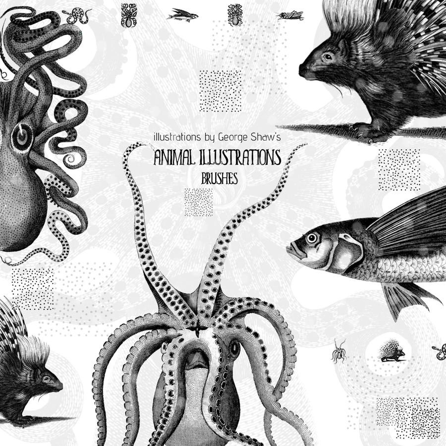 素描式刺猬、章鱼、深海怪鱼、毒蛇、昆虫PS图形笔刷