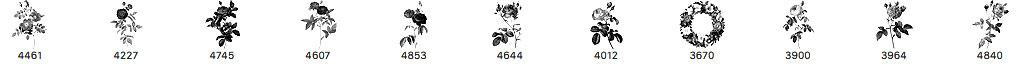 11种复古玫瑰花图形PS笔刷素材