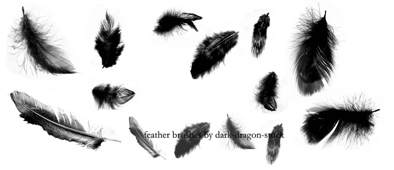 飘落羽毛、圣洁羽毛PS笔刷素材