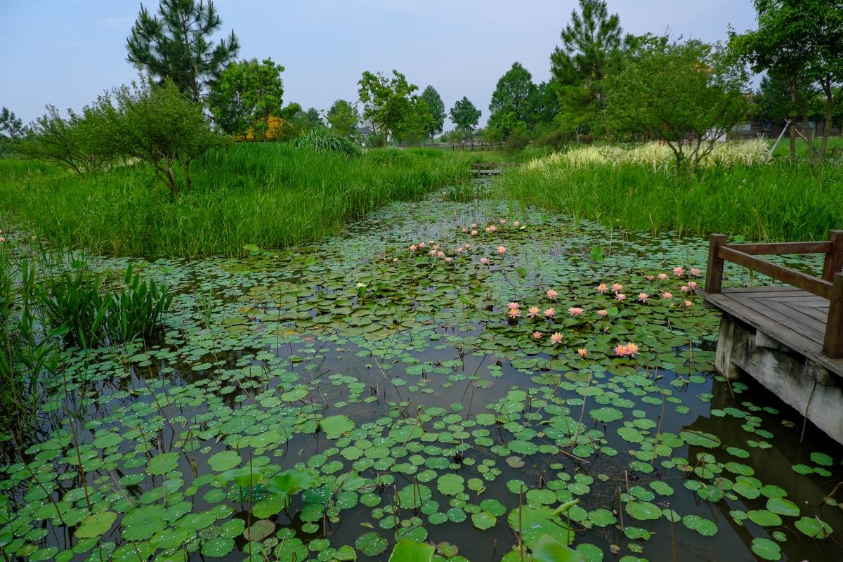 夏季湖畔、春意湖边背景照片下载