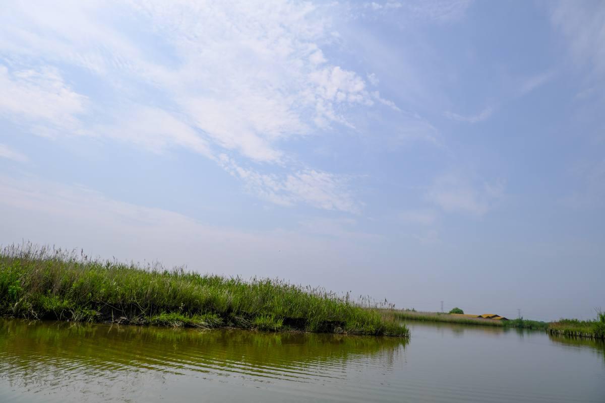 蓝天下的湿地图片下载