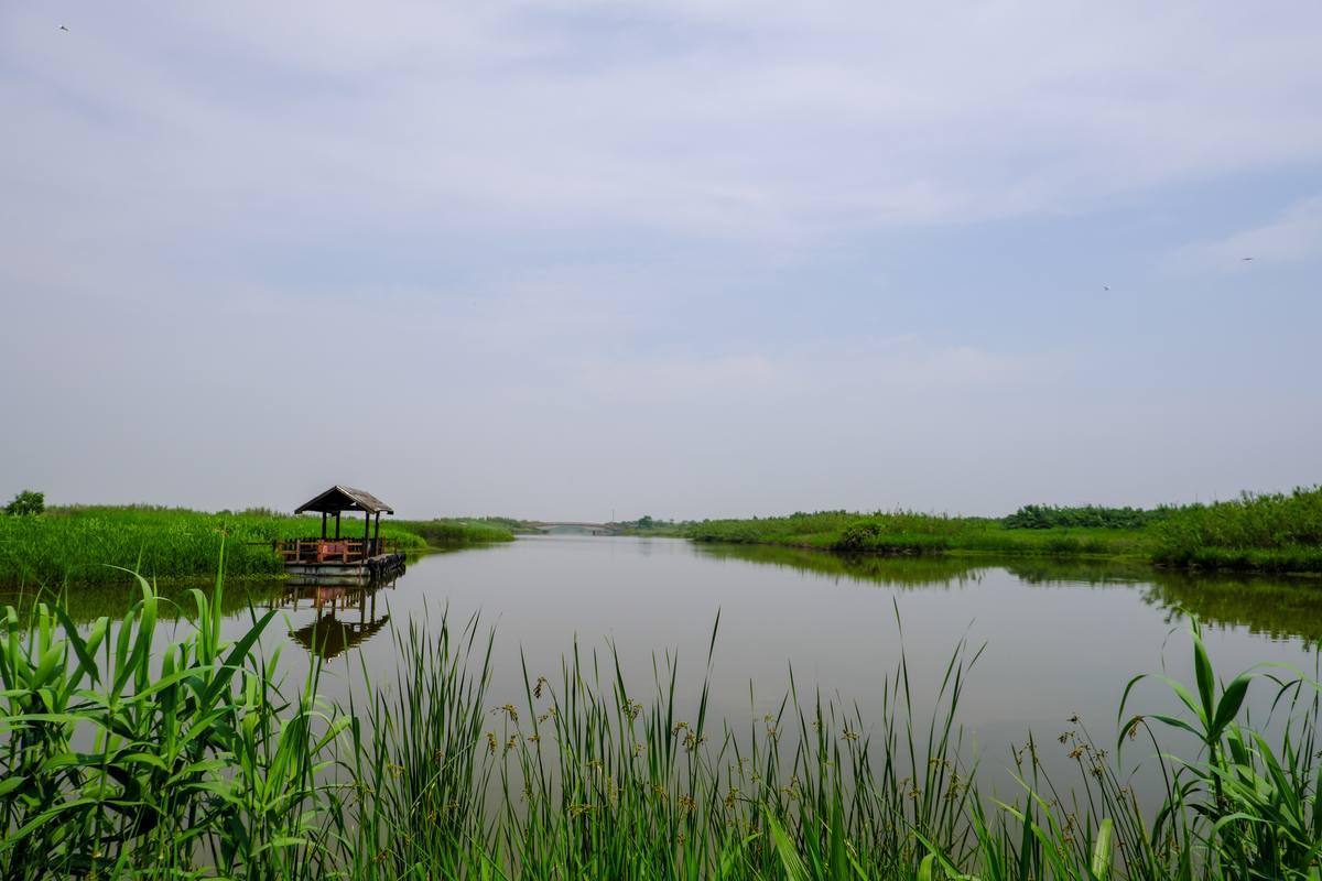 荷塘边草地蓝天背景图片