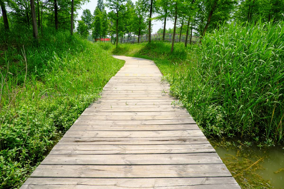公园木板小路走廊图片