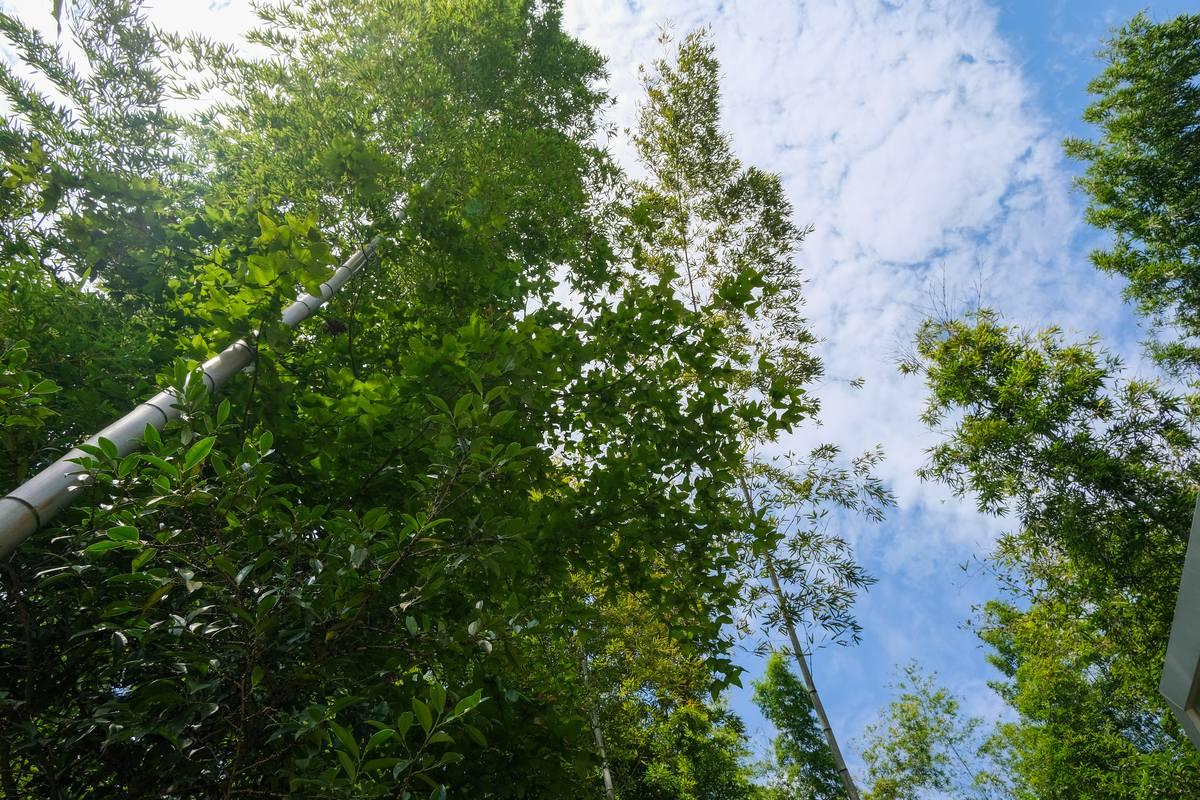 阳光、竹林背景图片  - 免费商用图库