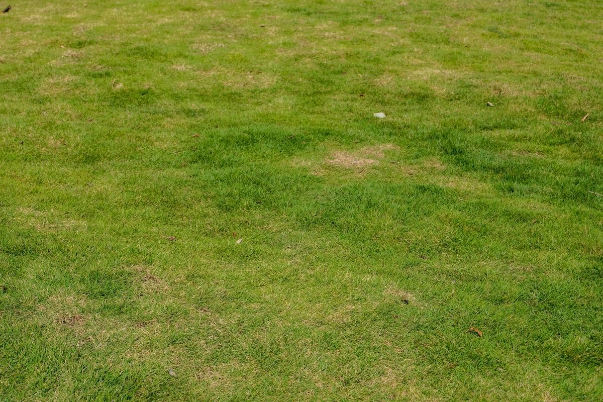 高清绿草地纹理材质贴图