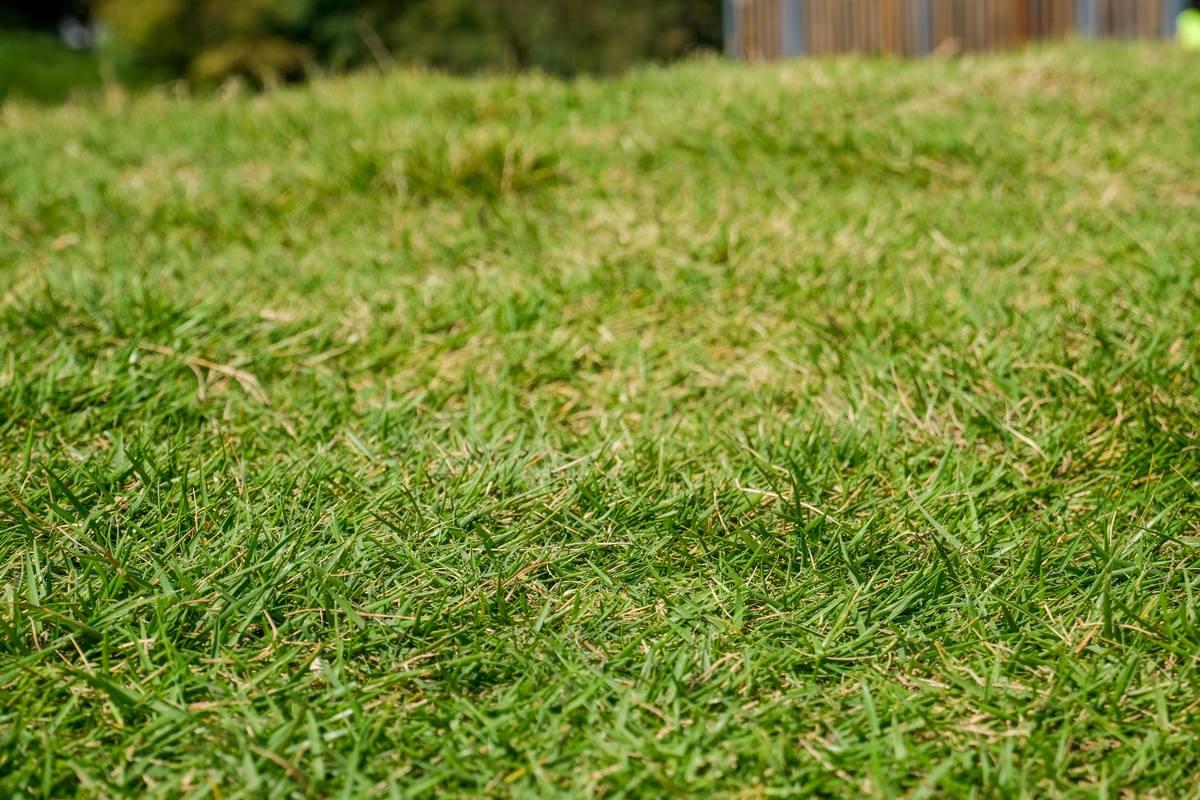 4K草地背景素材图片