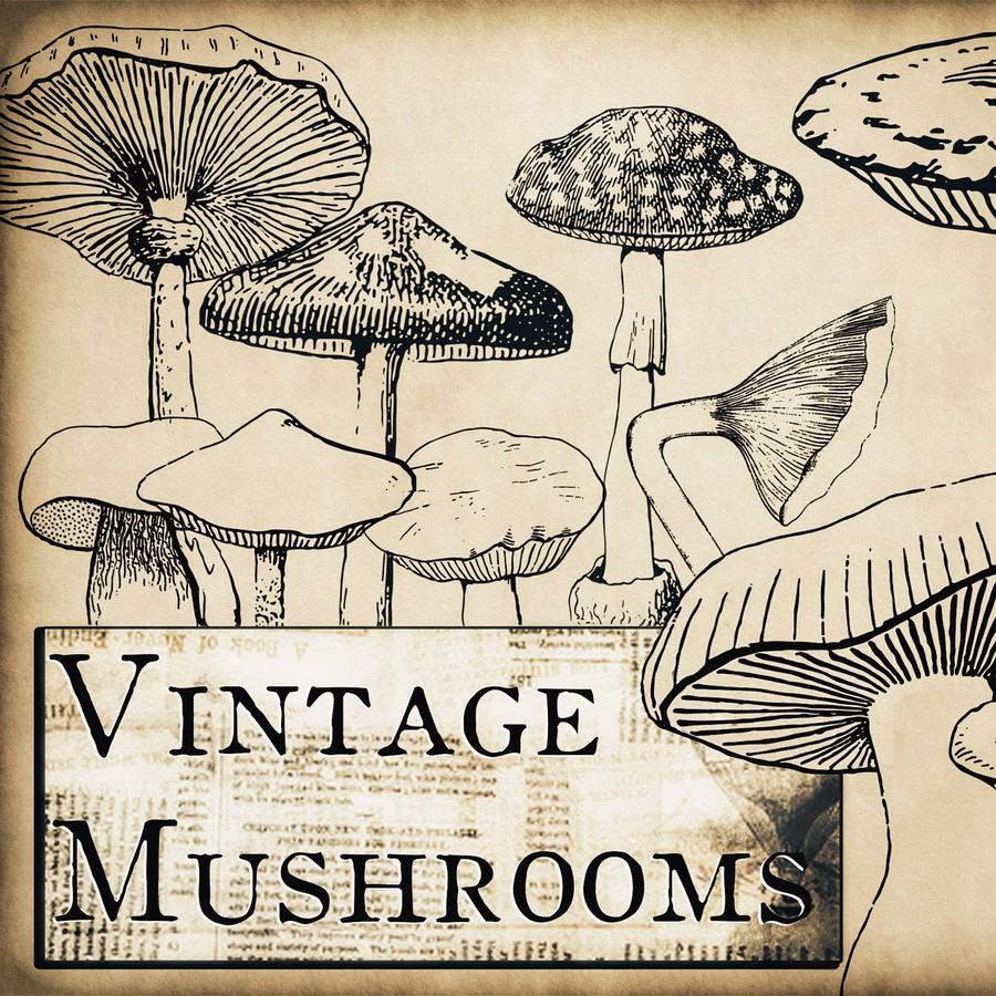 手绘蘑菇、菌菇图案PS笔刷素材