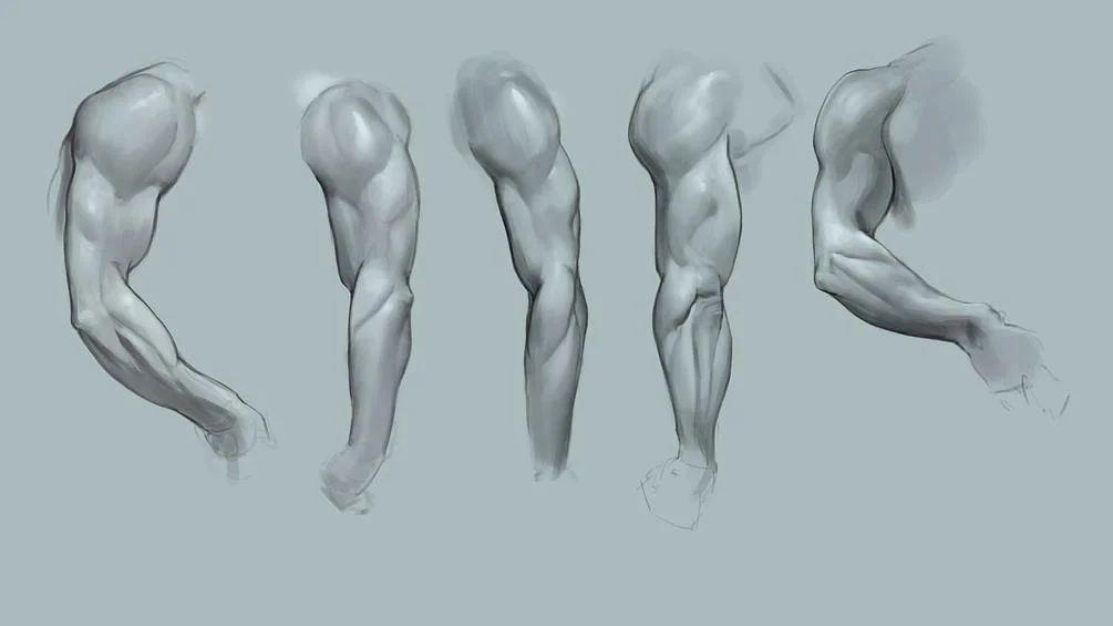 简单的Photoshop插画人体结构笔刷素材