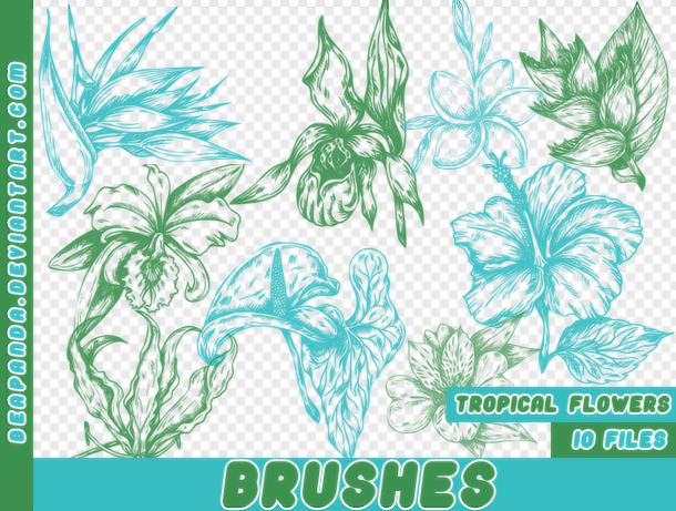 漂亮的植物素描绘画图案PS笔刷素材
